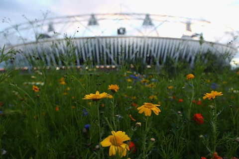 Wildflowers-Olympic-Park